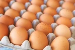 Insecticide : des centaines de milliers d'œufs de poule hautement contaminés