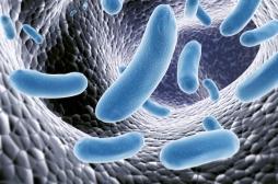 Génétique ou mode de vie : qu'est-ce qui façonne les bactéries contenues dans notre corps ?