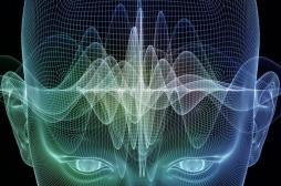 Mort cérébrale : des cellules souches pour ranimer le cerveau