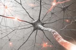 Maladie de Charcot: des amas de protéines en cause