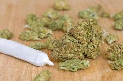 La marijuana ne sert à rien contre la dépendance aux opioïdes