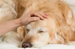 Troubles psychiques : les animaux soulagent les symptômes