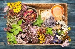 La phytothérapie peut perturber l'effet des médicaments et cela eut être grave