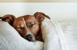 Les médecins ont besoin de chiens et  de chats… dans les maisons de retraite et les hôpitaux