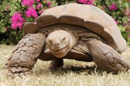 Une tortue accro au sexe a sauvé son espèce