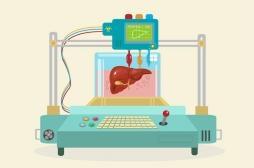 Une nouvelle technique de bio-impression 3D permet de faire des tissus complexes
