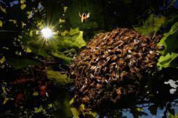 Brésil : le venin d'une guêpe utilisé contre le cancer