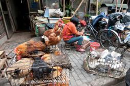 Grippe aviaire: 87 morts en Chine depuis un mois