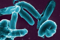 Tuberculose : une souche ultrarésistante transmise d'homme à homme
