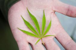 Cannabis : le plaidoyer du Pr Dautzenberg pour la légalisation