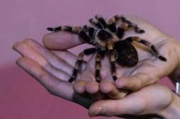 Arachnophobie : regarder les araignées pour vaincre sa peur