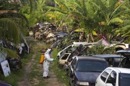 Zika : les chercheurs datent l'arrivée du virus au Brésil