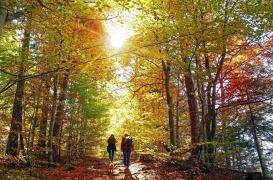 Deux heures par semaine dans la nature aurait un impact bénéfique sur notre santé