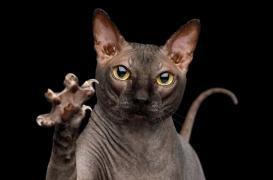 Un adolescent devient schizophrène après avoir été contaminé par son chat