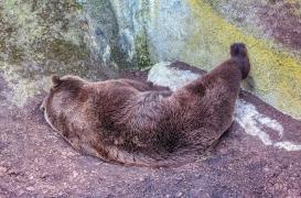 Obésité : comprendre les mécanismes derrière l'hibernation pour venir à bout de la maladie