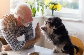 Le chien aiderait les survivants d'une crise cardiaque ou d'un AVC à vivre plus longtemps