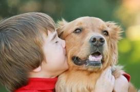 Il n'y a pas que le chien… Ces animaux qui nous veulent et nous font du bien.