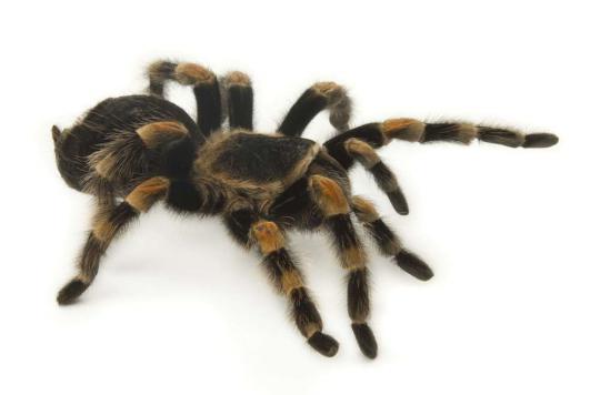 Sa phobie des araignées disparaît après une opération du cerveau