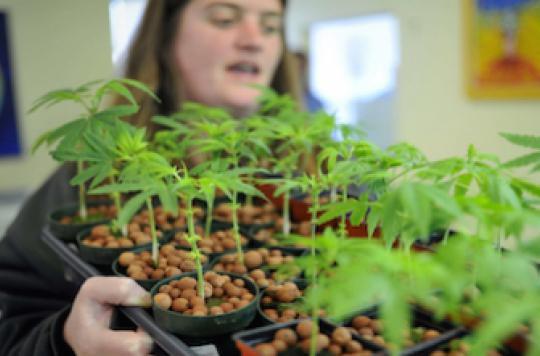 Cannabis : l'Académie de médecine tire la sonnette d'alarme