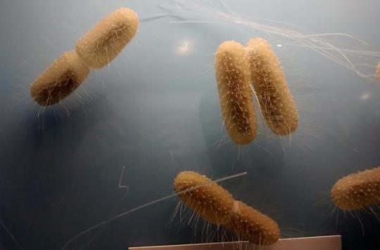 Un antibiotique efficace  contre l'antibiorésistance