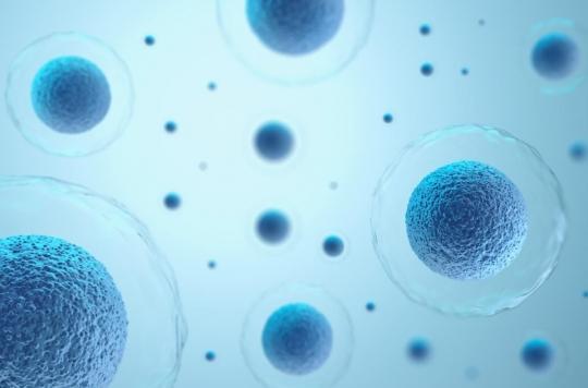 Guérison des plaies : comment les cellules savent où se déplacer ?