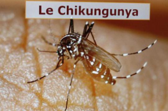 L'épidémie de chikungunya a fait 39 morts aux Antilles