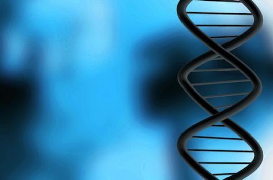 Un ADN vieux de 400 000 ans livre ses secrets