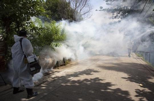 Dengue : six nouveaux cas autochtones à la Réunion