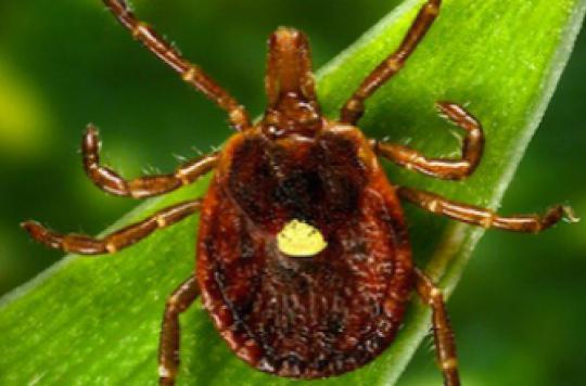 Maladie de Lyme : un procès qui souligne le rejet des médecins