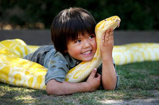 Tortues et serpents transmettent la salmonellose aux enfants