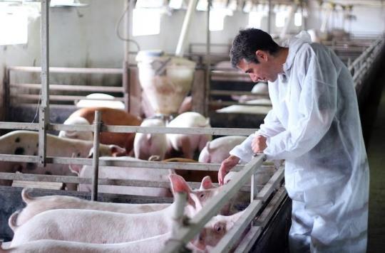 Antibiotique : l'usage vétérinaire continue de chuter