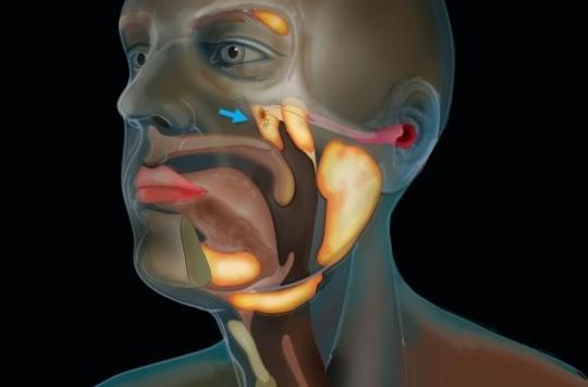 Une nouvelle glande salivaire découverte dans la gorge