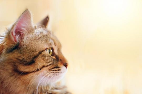 Lyssavirus : le chat qui inquiète l'Italie