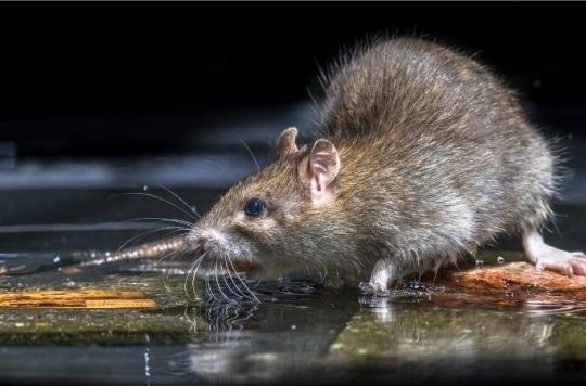 Vacances d'été : attention à la leptospirose lors des baignades en eau douce