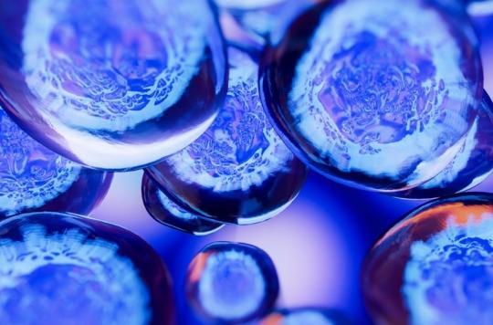 Embryon : des découvertes prometteuses contres les fausses couches et l'infertilité