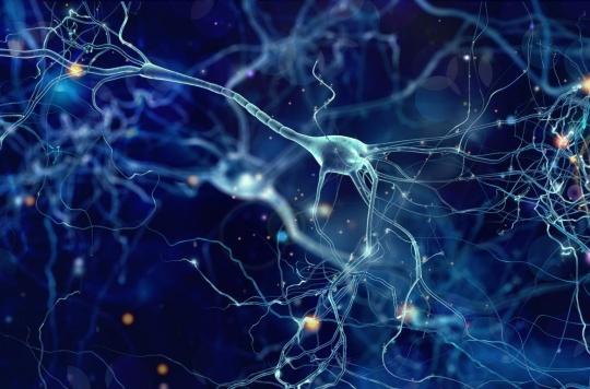 Finalement, notre cerveau fabrique de nouveaux neurones jusqu'à plus de 90 ans