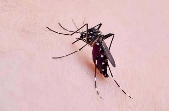 Dengue : un quartier de Bergerac se lance dans la chasse au moustique tigre