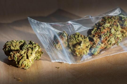 En 20 ans, le taux de substance psychotrope dans le cannabis a triplé !