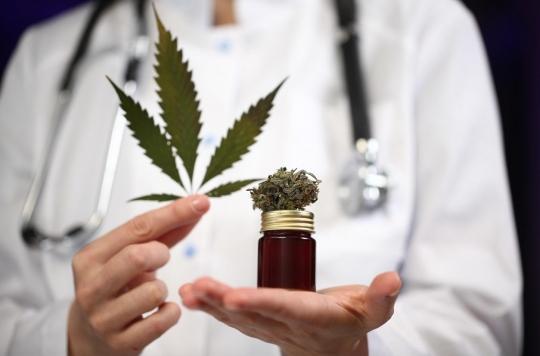 Antibiorésistance : de nouveaux médicaments à base de cannabis ?