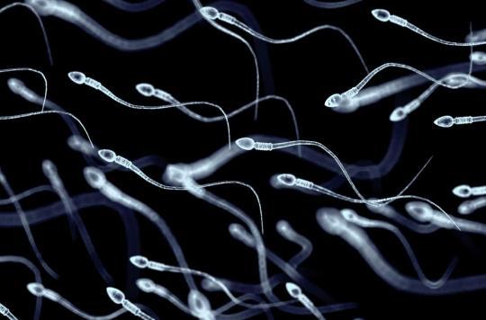 Comment la chaleur affecte la qualité des spermatozoïdes