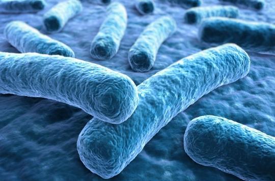 Ulcère de Buruli: le mystère de la bactérie mangeuse de chair s'épaissit