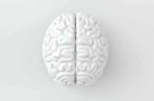 Cerveau : comment il gère l'espace et le temps