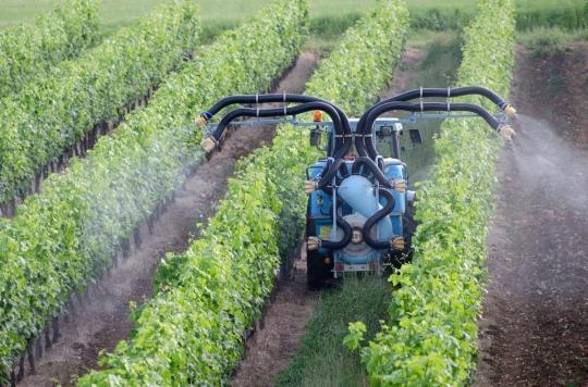 Pesticides : un lien avec la leucémie avéré