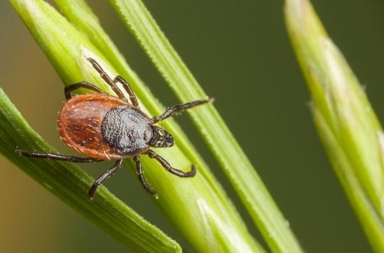Lyme : des parlementaires manifestent pour qu'une forme chronique de la maladie soit reconnue