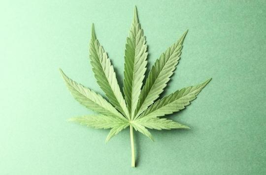 Cannabis : les amendes seront de 300 euros, pour le plus grand bien du cerveau