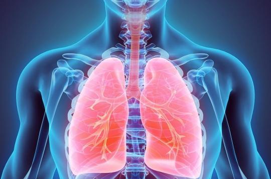 Comment les cellules souches des voies respiratoires se régénèrent