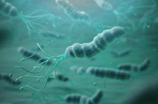 90% des cancers de l'estomac sont dus à une bactérie
