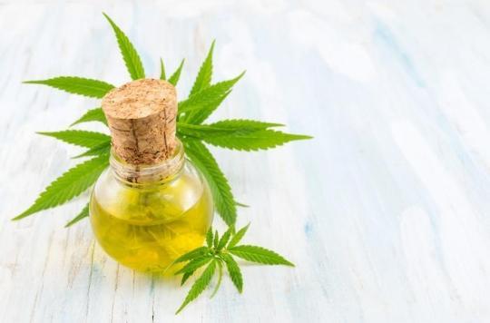 Cannabis : le THC légalisé en France par erreur en 2007