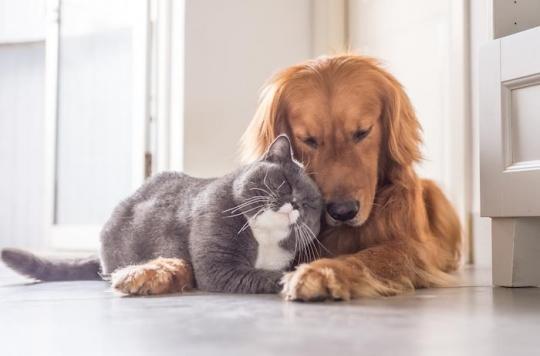 Les animaux, meilleurs amis de la santé de l'homme