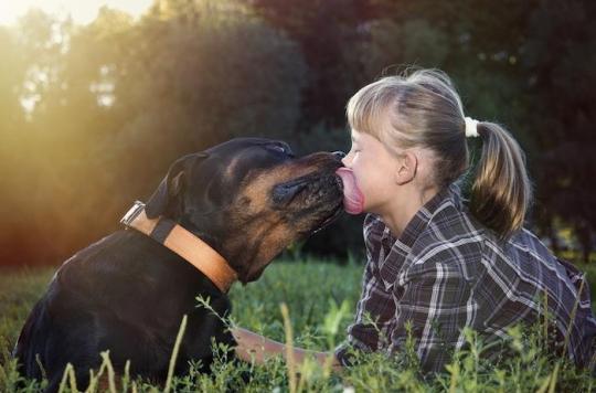 Décès, amputations : quand la salive des chats et des chiens est toxique